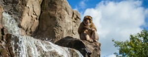 La forêt des singes-rocamadour