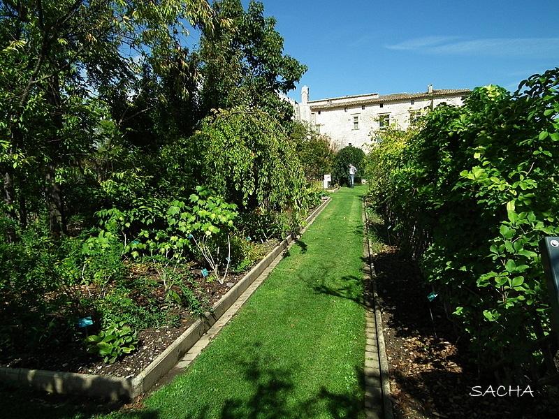Prieuré de Salagon-Jardin temps moderne