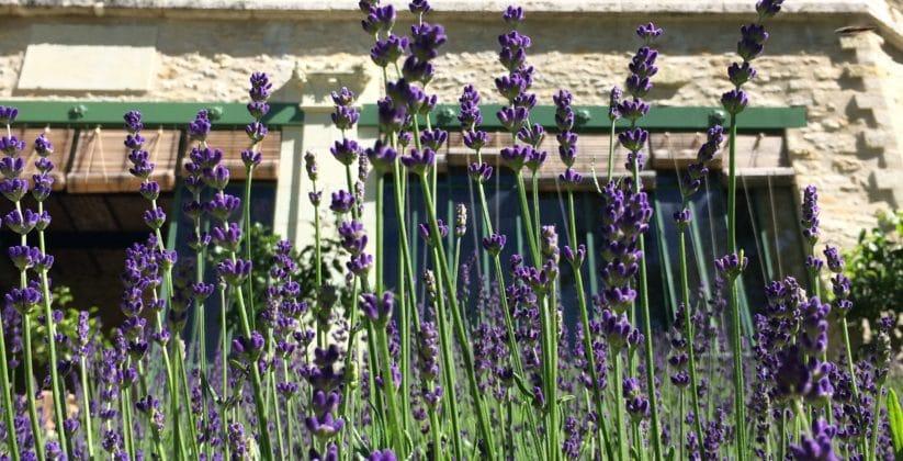 chateau Gaillard-jardin remarquable