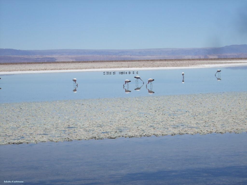 Chili-salar de Tarar-laguna chaxa