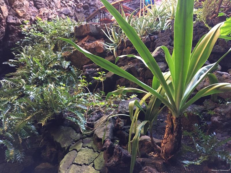 Végétation Lanzarote