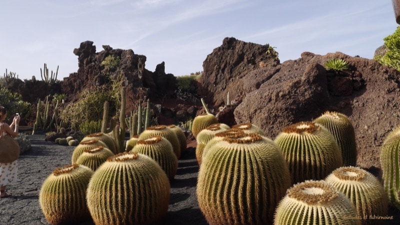 cactus mala