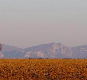 Plateau de Valensole
